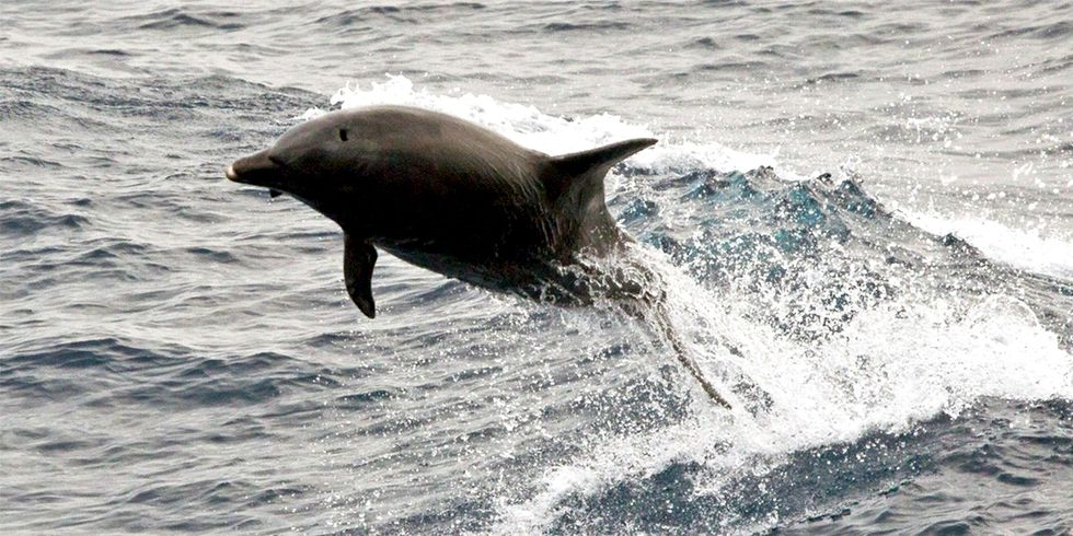 30 Dolphins Illegally Captured Returned to Ocean Following Police Raid