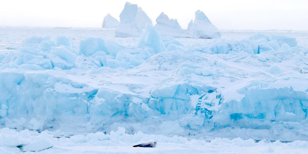 My Month-Long Voyage to the Antarctic Peninsula