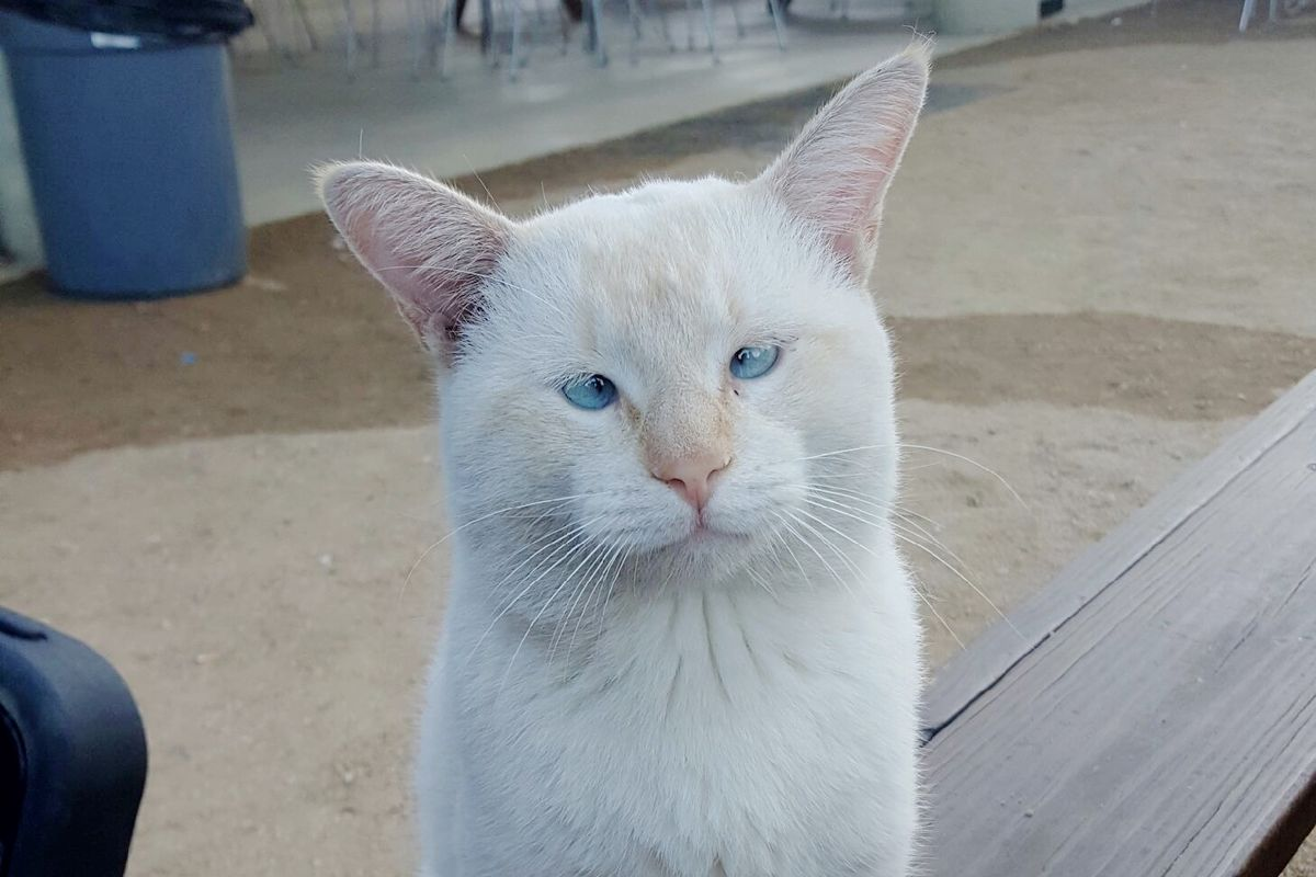 Stray Cat Made Food Park His Home, Locals Bring Him Back to Health