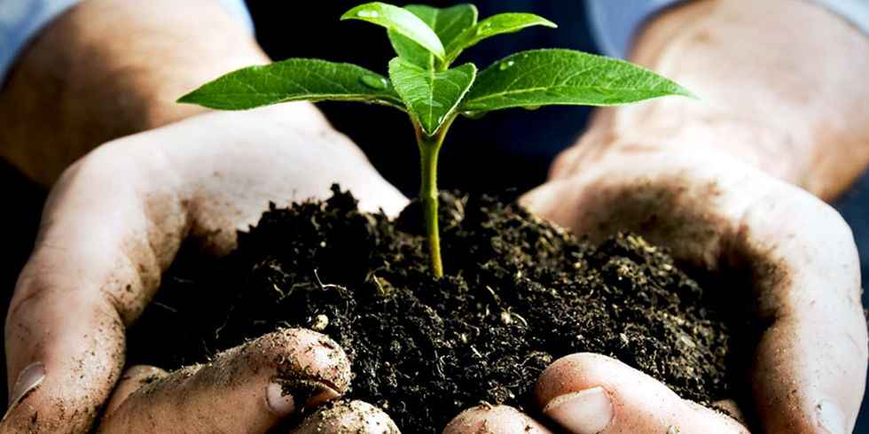 Regenerative Agriculture Will Feed the World and Cool the Planet