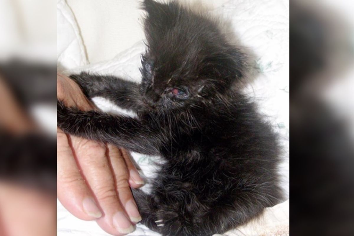 They Save Kitten's Eyes and Help Her See, What a Difference in Just 5 Days
