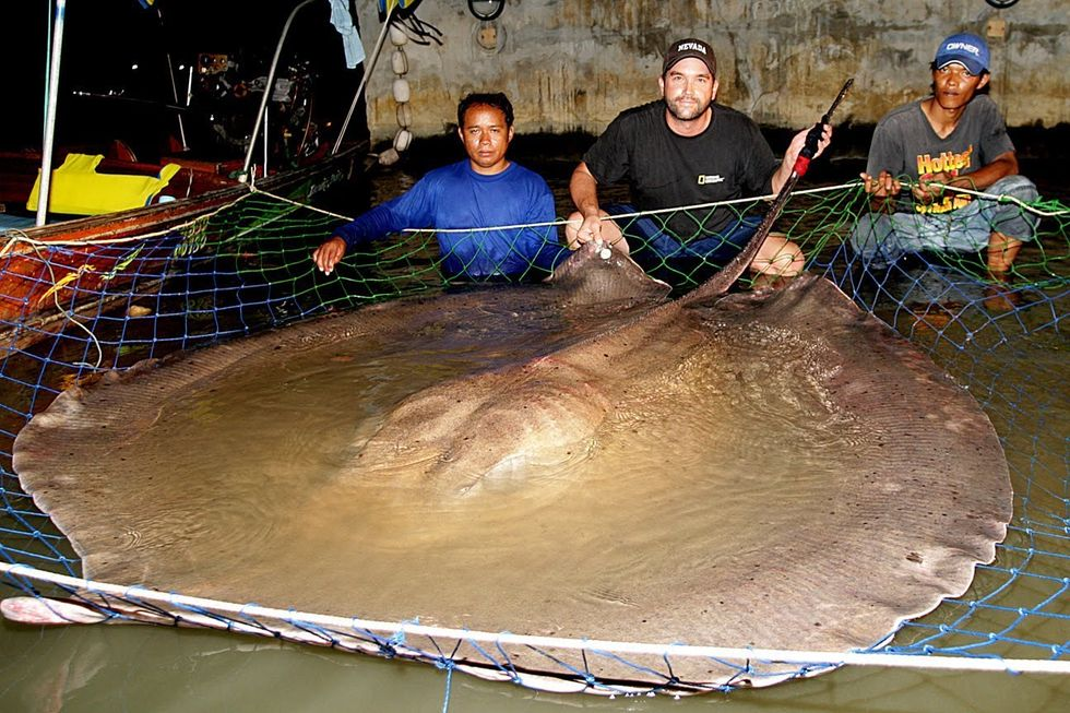 70 Giant Freshwater Stingrays Found Dead in Thailand River