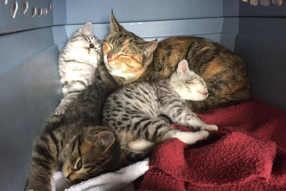 Stray Cat Mom Shelters Her Babies From Rain Behind Shovel, Won't Leave Their Side
