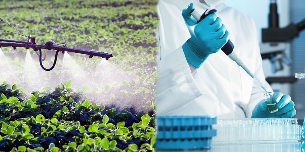 Alarming Levels of Glyphosate Found in Popular American Foods