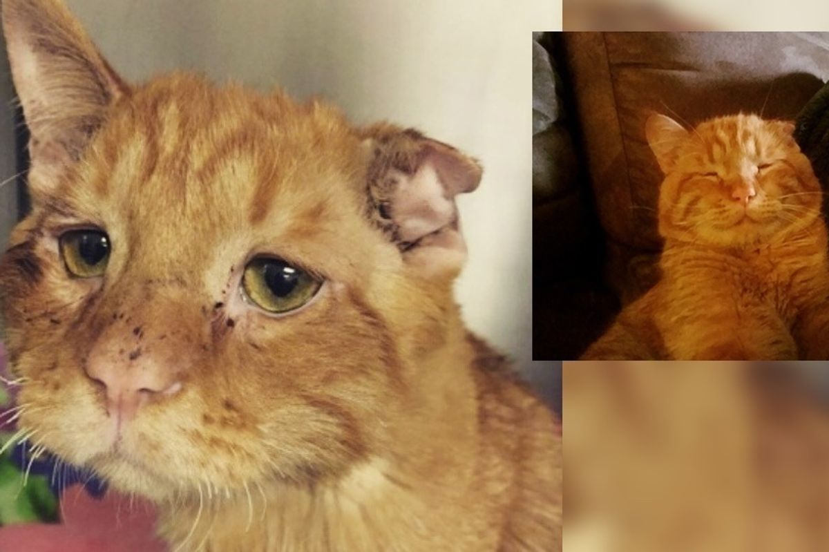 Couple Takes a Chance on Sad Shelter Cat Who Couldn't Find Home, an Hour After Adoption..
