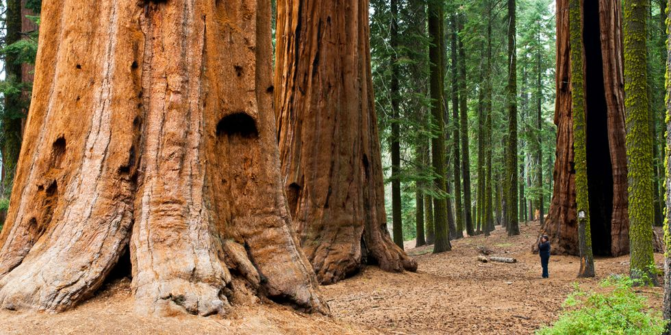 Ireland to Plant Largest Grove of Redwood Trees Outside of California