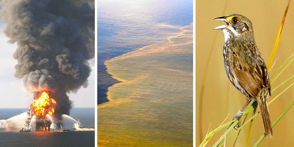 Oil From BP Spill Has Officially Entered the Food Chain