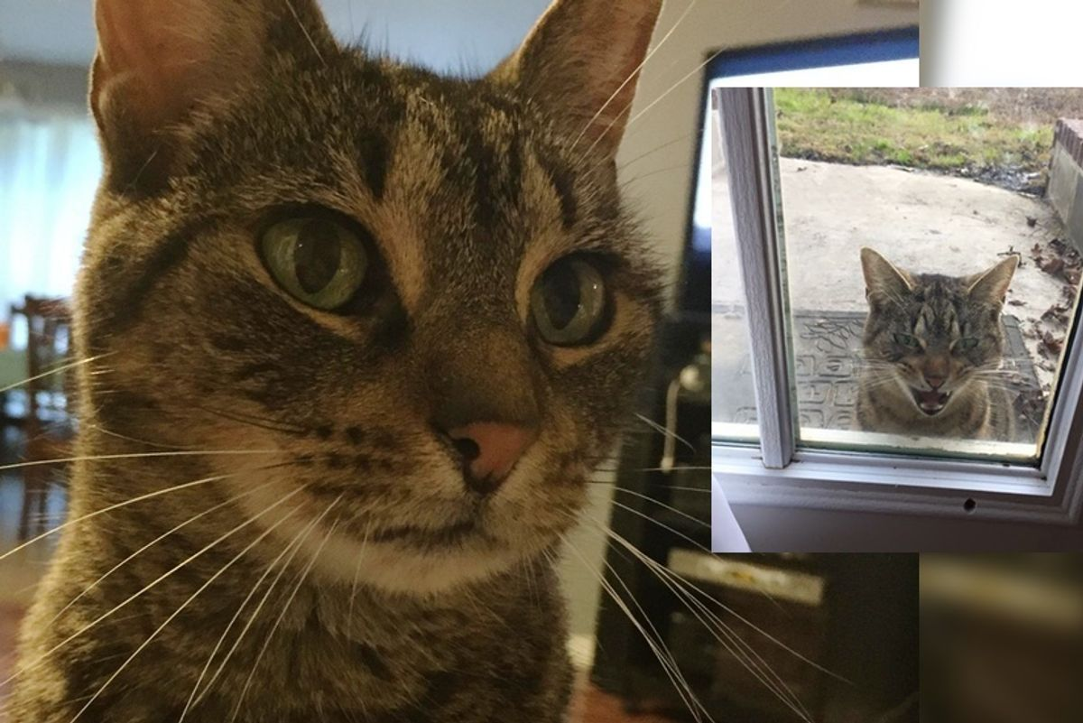 Stray Cat Chooses Family and Demands to Be with Them