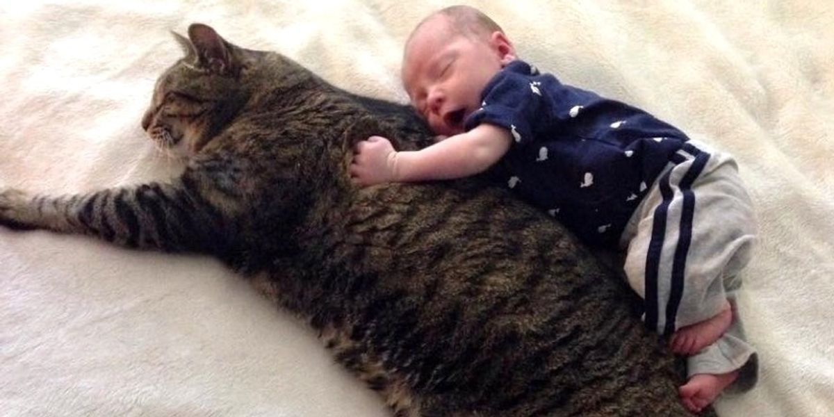 Cat Guards His Baby Brother and Becomes His Cuddle Buddy For Life, Then and Now..