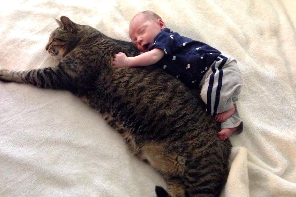 newborn baby boy and tabby cat