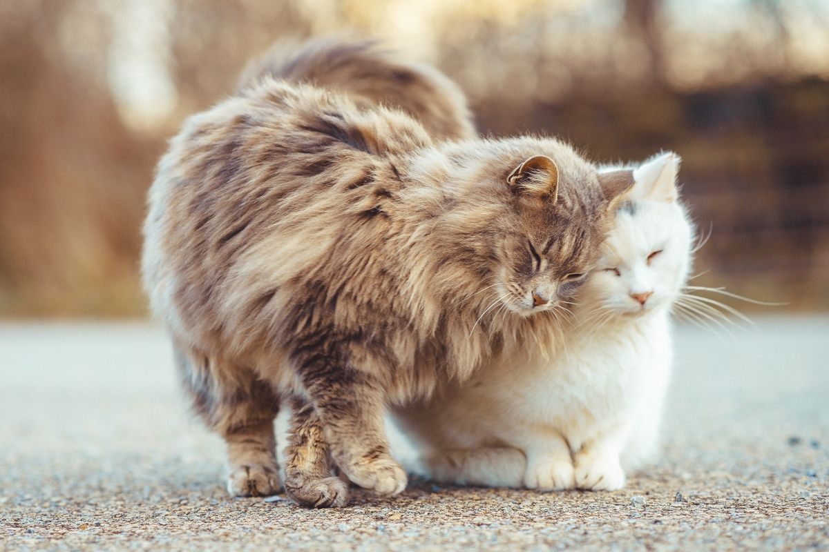 Couple Cares for 25 Lumber Yard Cats and Tries to Earn Their Trust