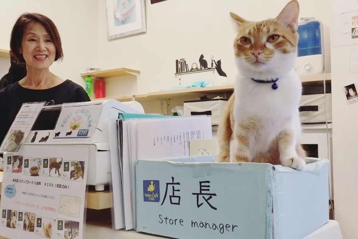 Happy Place Run by Nine Rescue Cats, Store Manager is Feline