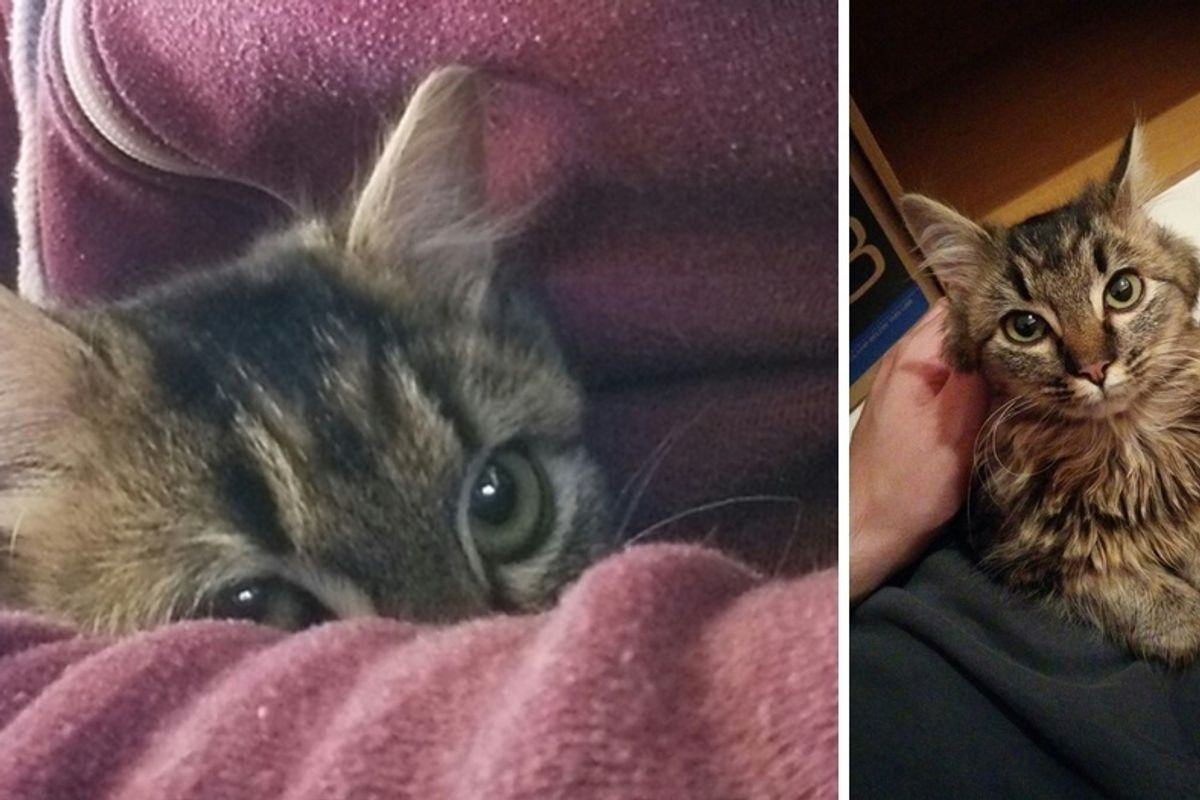Shelter Cat So Shy She Hides in Man's Arms, But A Day After Adoption...
