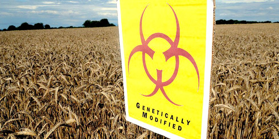 Local Governments Can Prohibit GE Crops, Says U.S. Court of Appeals