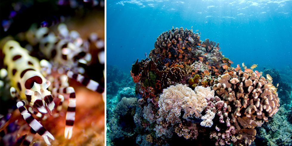 The Marine Hotspot That Could Save Our Seas