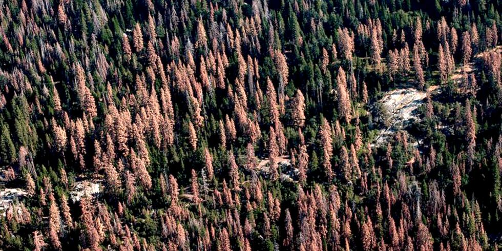 102 Million Trees Have Died in California's Drought