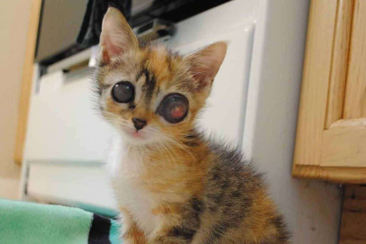 """Stray Kitten with """"Frog Eyes"""" Surprises Rescuers with Her Amazing Fight to Live"""