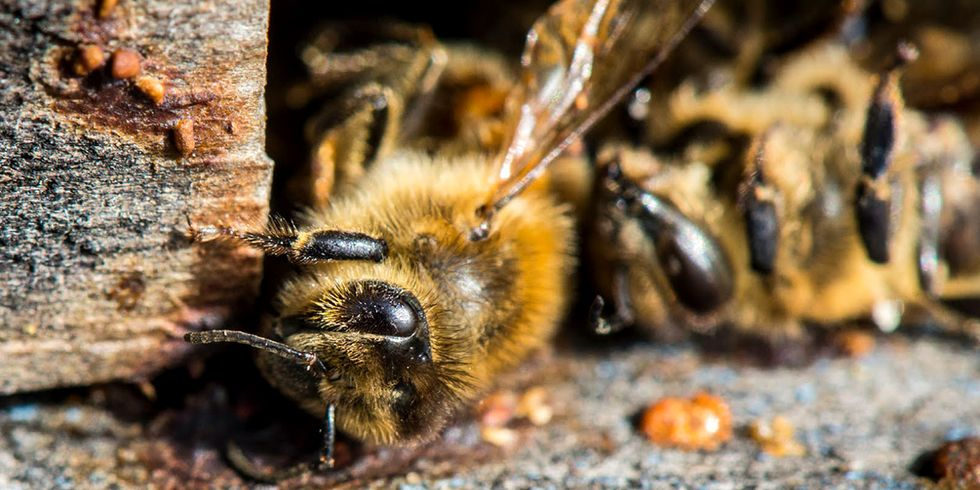 Court Fails to Protect Bees From Toxic Pesticides