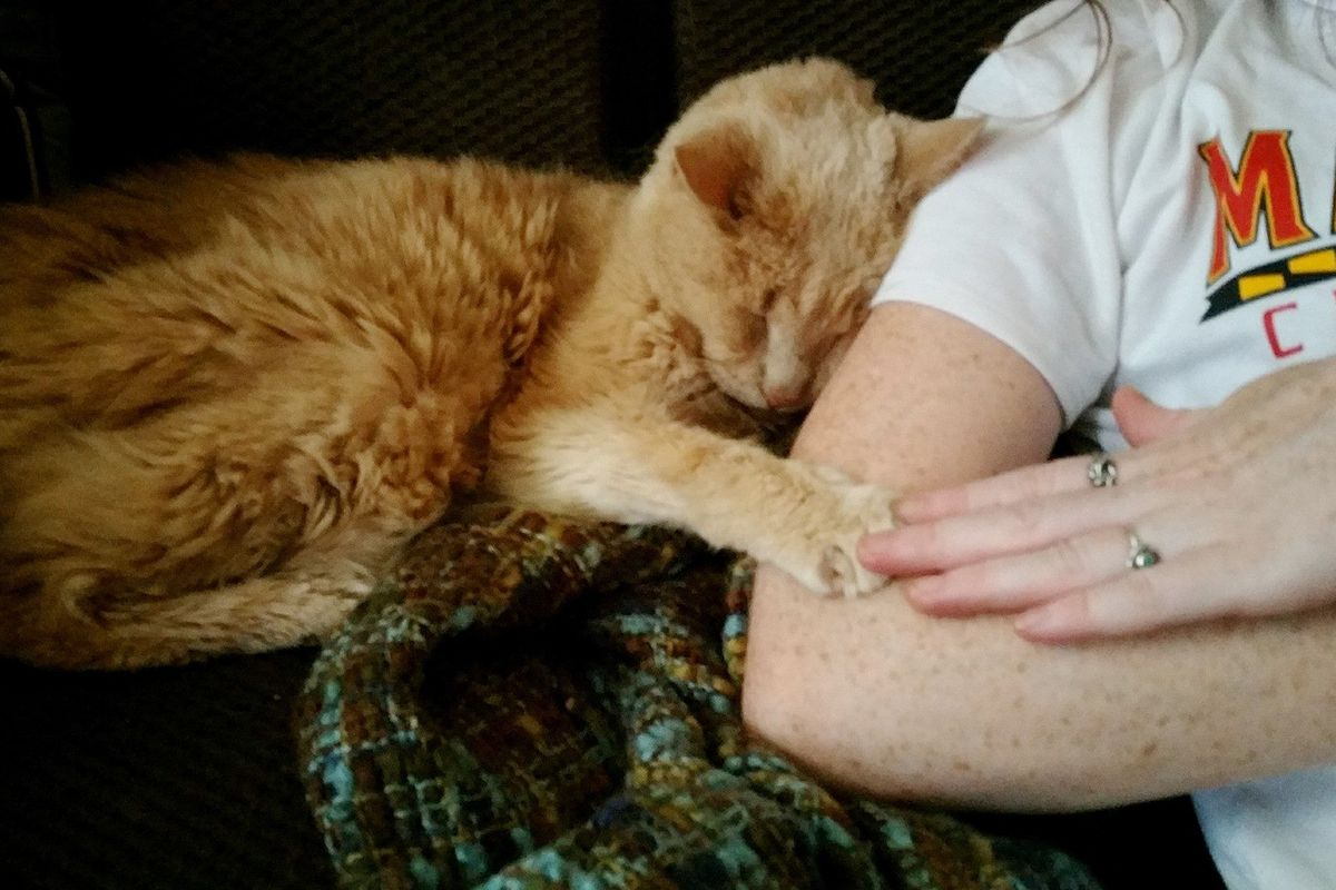 Couple Gave 21 Year Old Super Senior Cat a Chance to Live Out His Best Life, Now a Year Later...