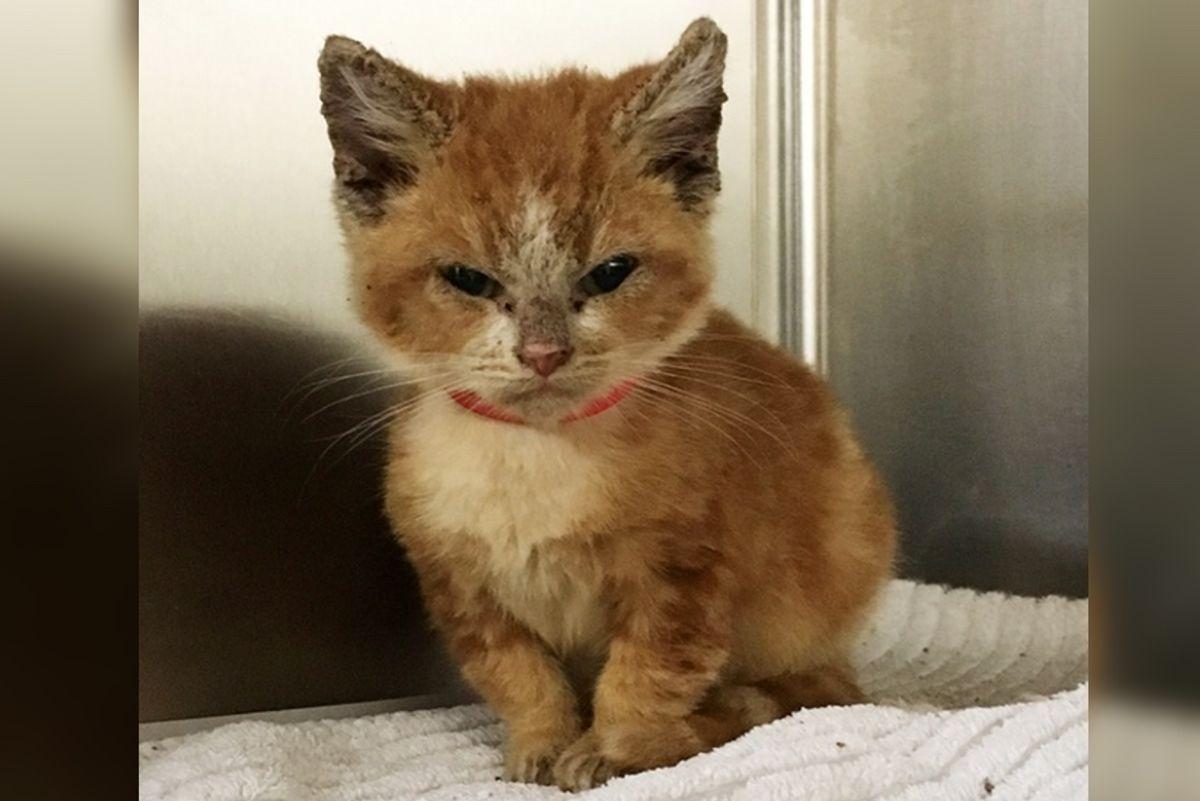 Grumpy Rescue Kitten Transforms Into a Happy Kitty