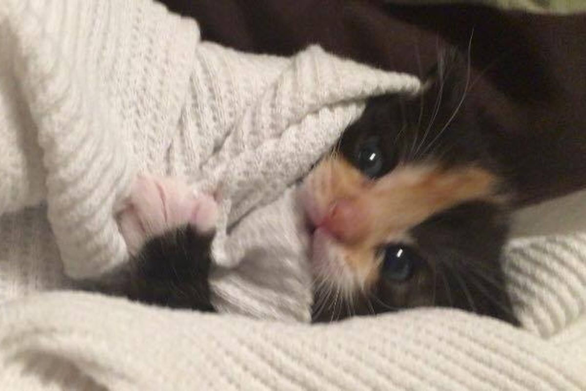 Orphaned Kitten Saved by Woman, Who is a Survivor Just Like Her
