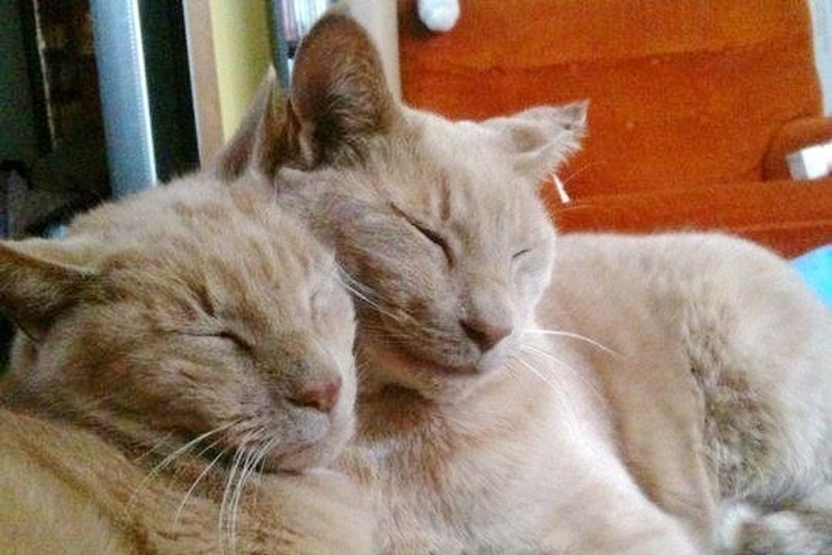 16-year-old Cat Finds His Missing Twin Brother in an Unexpected Way