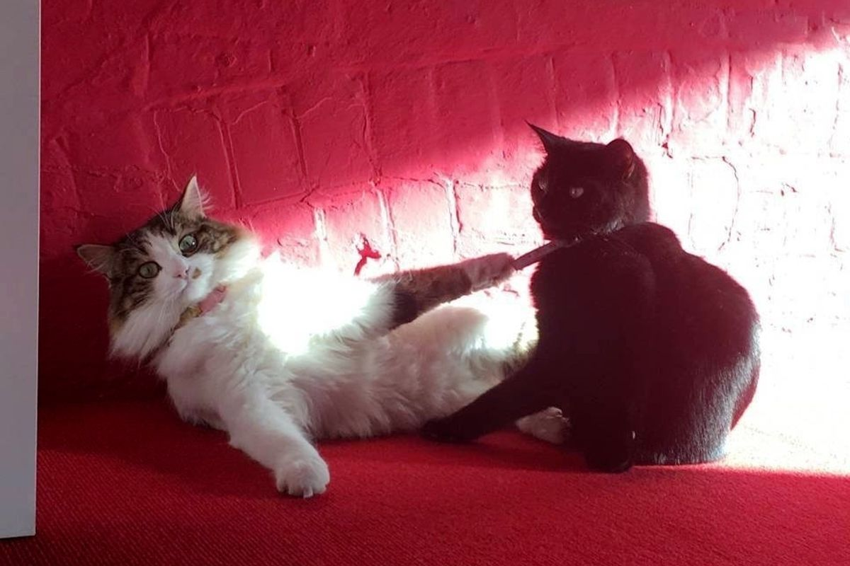 Company Hires Two Shelter Cats to Help Rescue Their Enployees