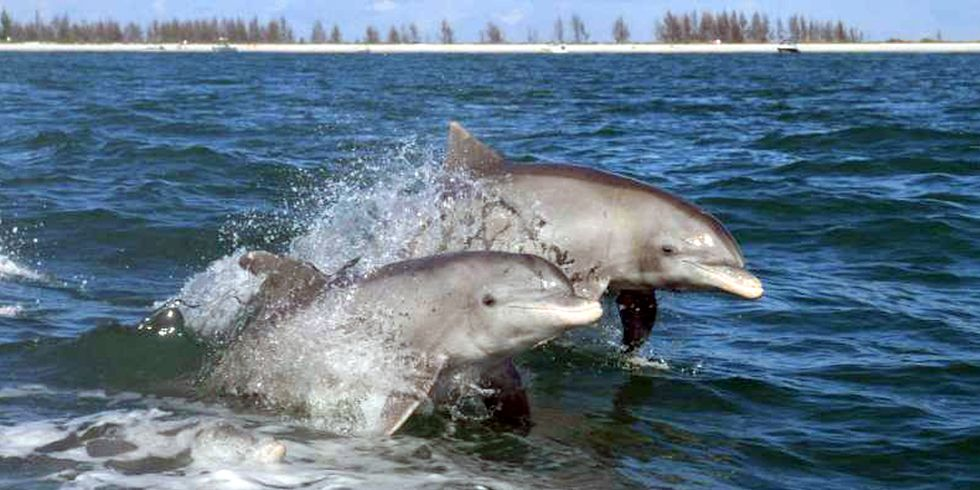 Everglades Dolphins Have Highest Level of Mercury Ever