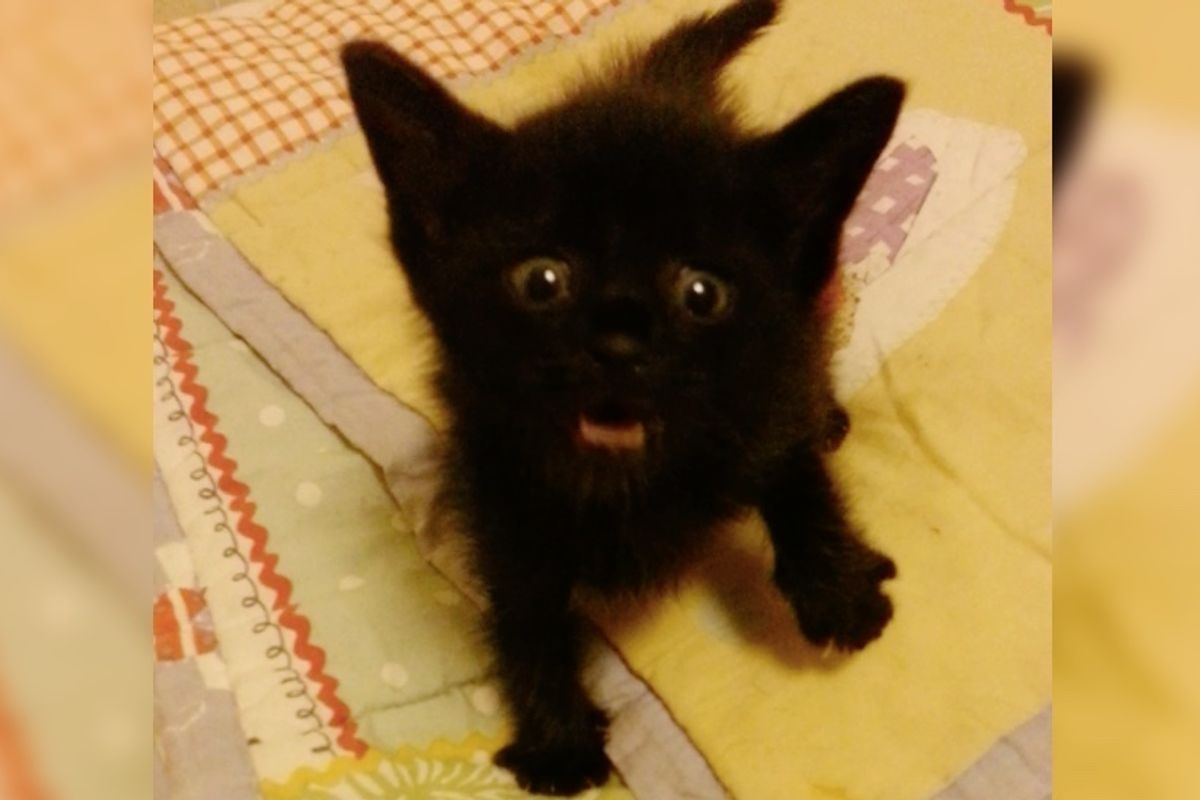 They Give Roadside Kitten Food, He is So Happy He Sings the Song of Meows