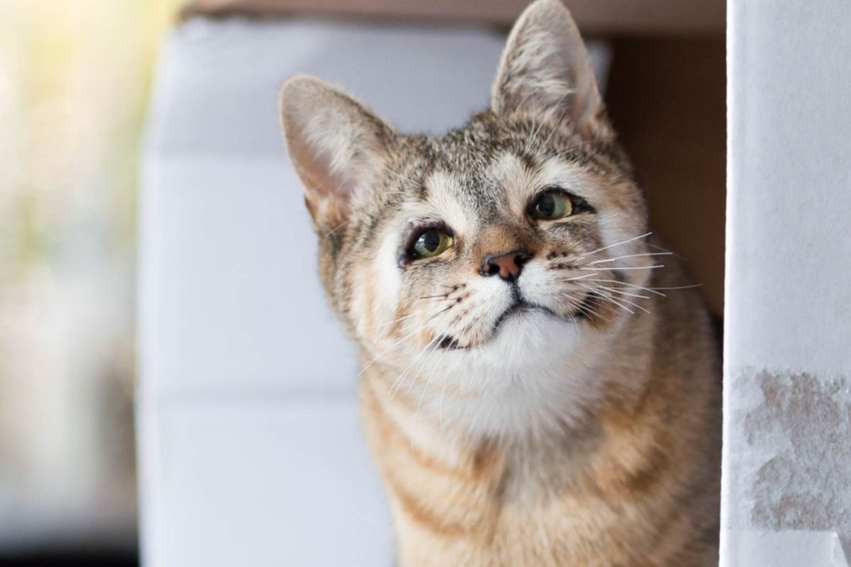 They Save Sight of Cat Born without Eyelids, She Couldn't be Happier