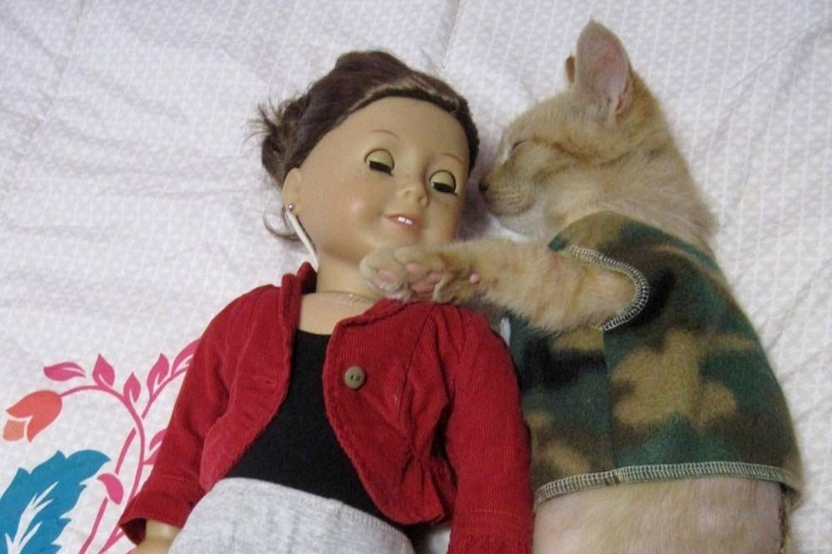 Injured Kitten Comforted by American Girl Doll Clothes, It Changes Everything..
