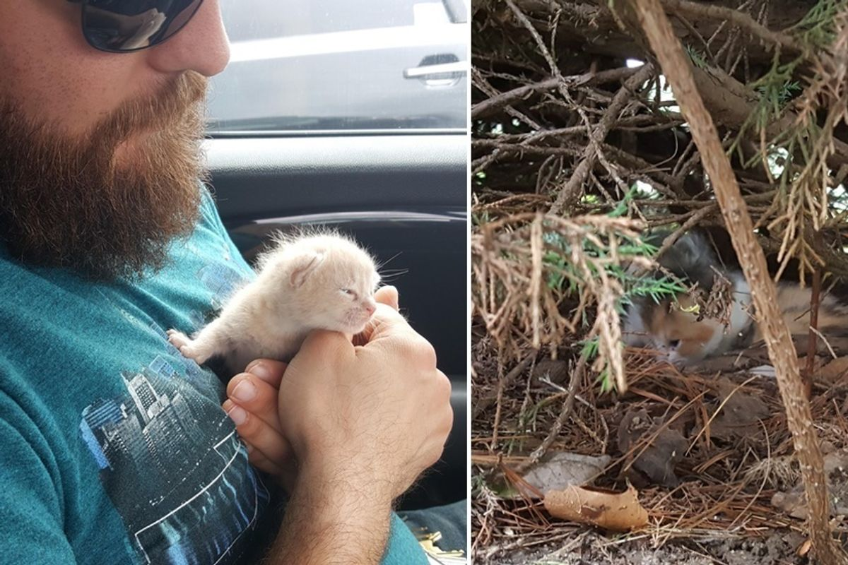 Family Heard Kitten Cries from Bush and Couldn't Believe What They Found