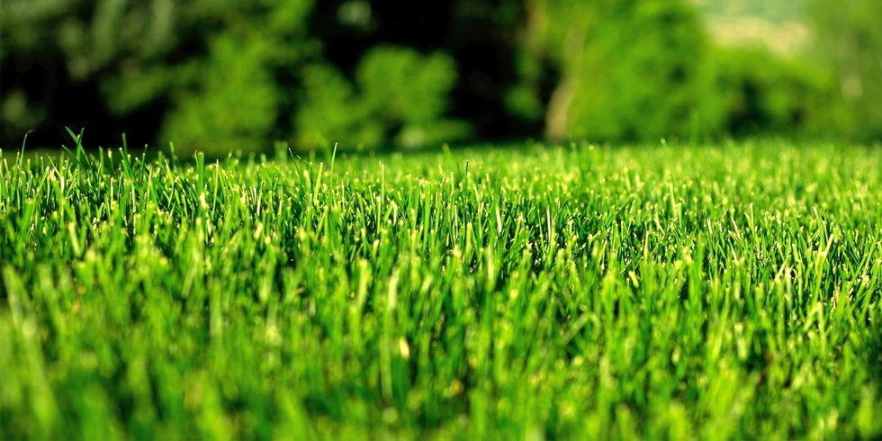 USDA Gives Monsanto and Scotts' Glyphosate-Resistant Grass Green Light