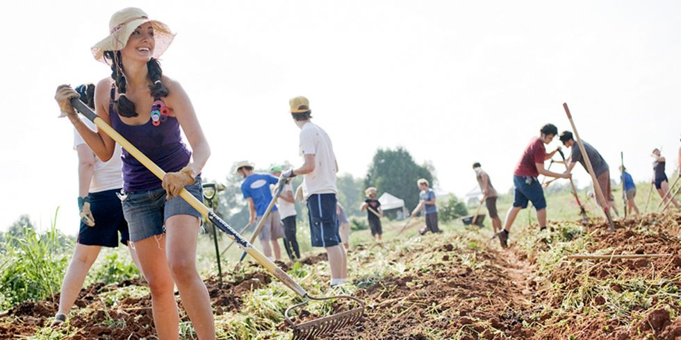 What Is A Crop Mob, And Should I Join One?