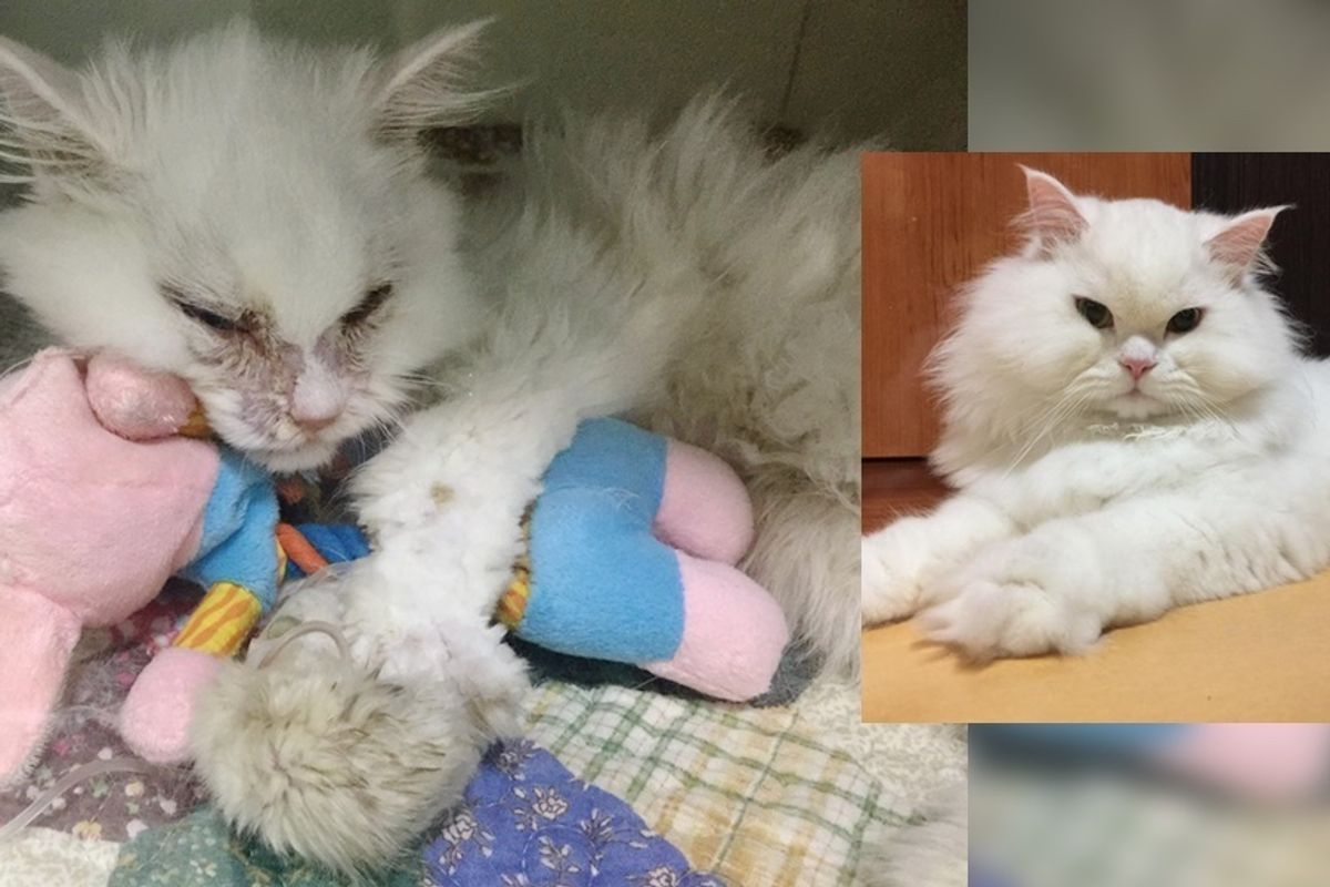 Woman Gives Cat a Chance While Others Say He's 'Not Worth It', a Month After Rescue...