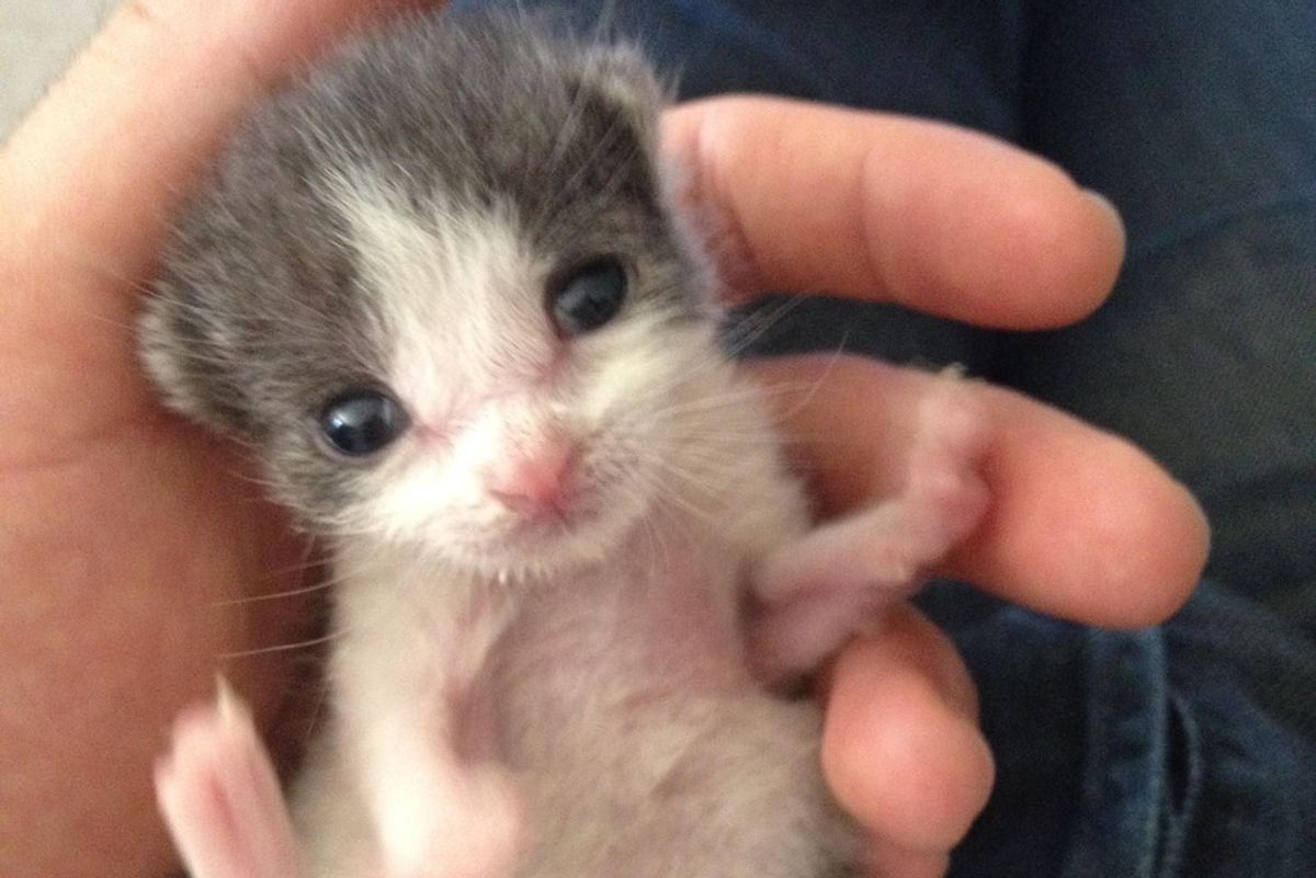 Man Saves Orphaned Kitten from Backyard and Raises Her into Snuggle Bug, Now a Year Later