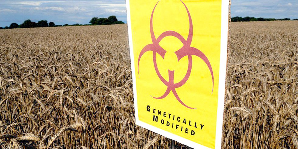 Has Europe Been Right All Along to Renounce GE Crops?