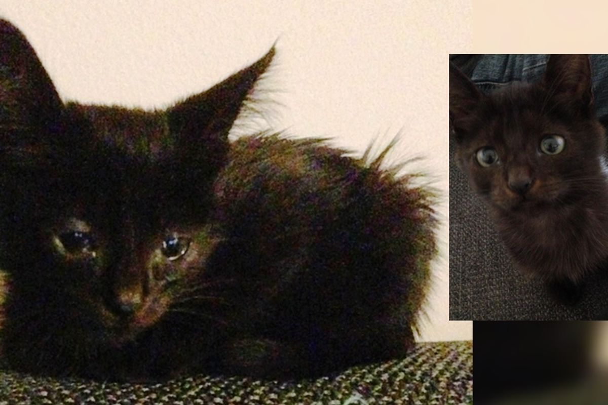 Woman Takes a Chance on Sad Stray Kitten, What a Difference a Few Days Make..
