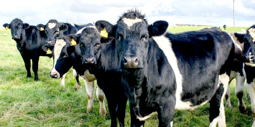 Methane Emissions Soar, Agriculture Likely to Blame