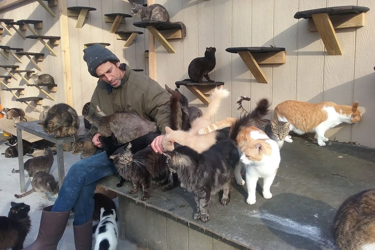 Man Saves Over 300 Homeless Cats After Losing His Son in an Accident