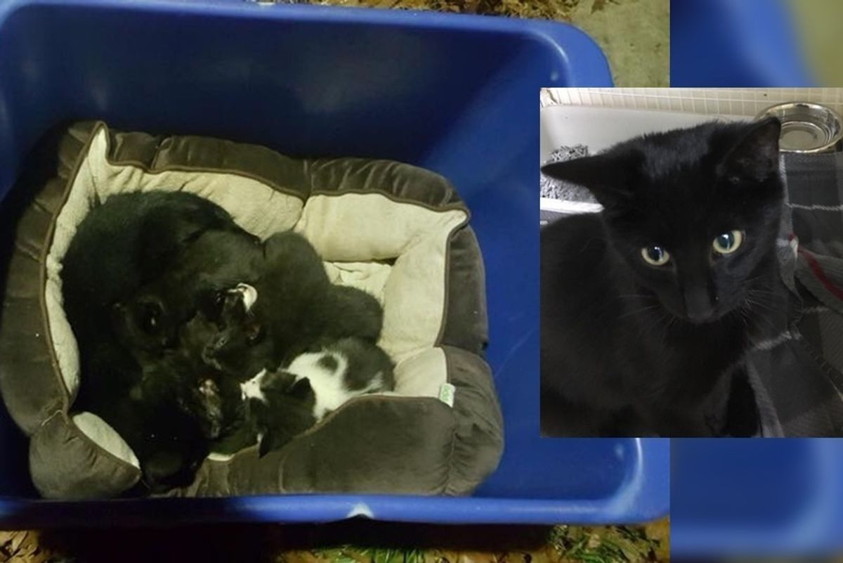 Cat Found Protecting Kittens Left in the Cold, but the Cat is Not Mom at all.. (with Updates)