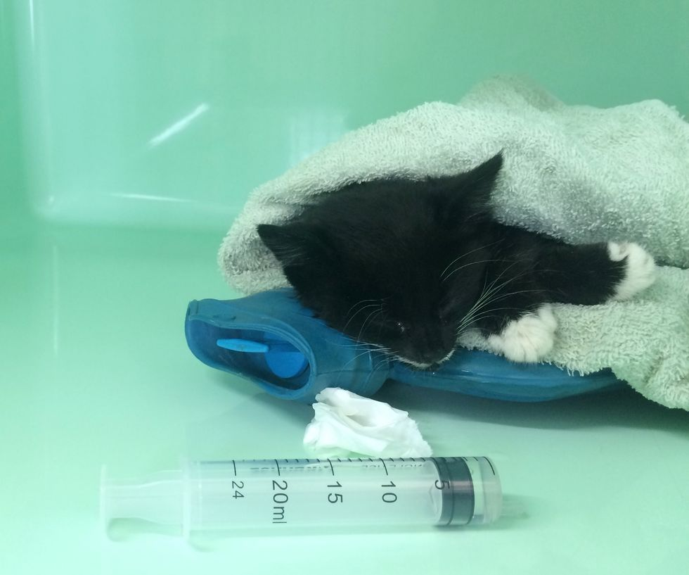 Kitten Brought in Completely Lifeless, After 3 Hours of ...