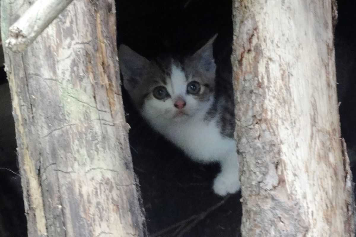 Feral Kittens From Fear to Love and Trust