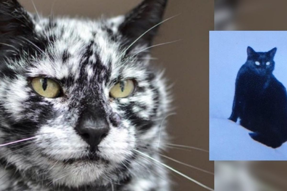 19 Year Old Cat Grows Snowflake Pattern from His Dark Black Coat Over a Decade