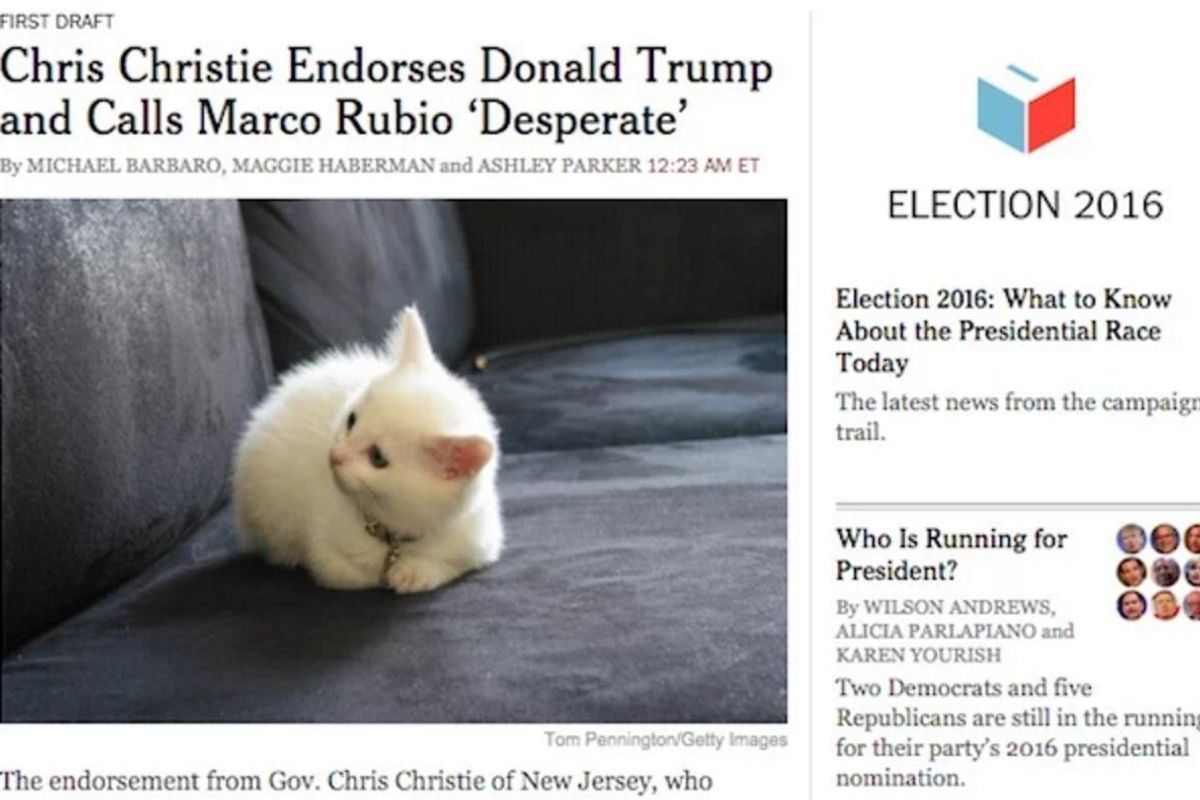 Download AnExtension That Replaces Pictures of Donald Trump With Kittens
