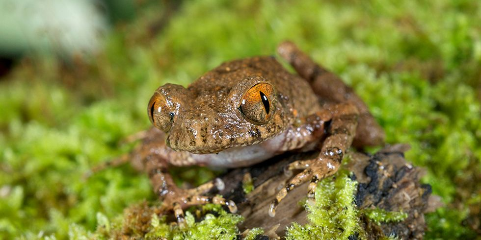Scientists Discover 163 New Species