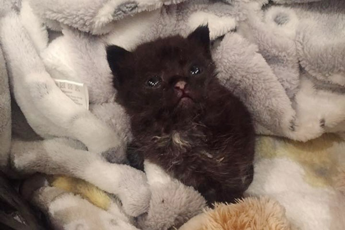 Kitten Found in Wooden Reel Survives Despite Having No Food and Water for Days