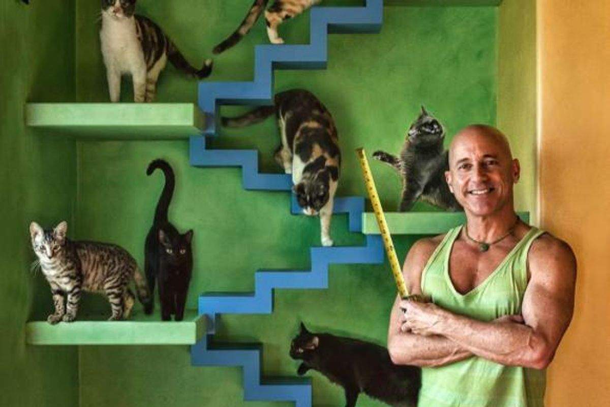 Man Transforms His House into Cat Paradise for His 22 Rescued Cats