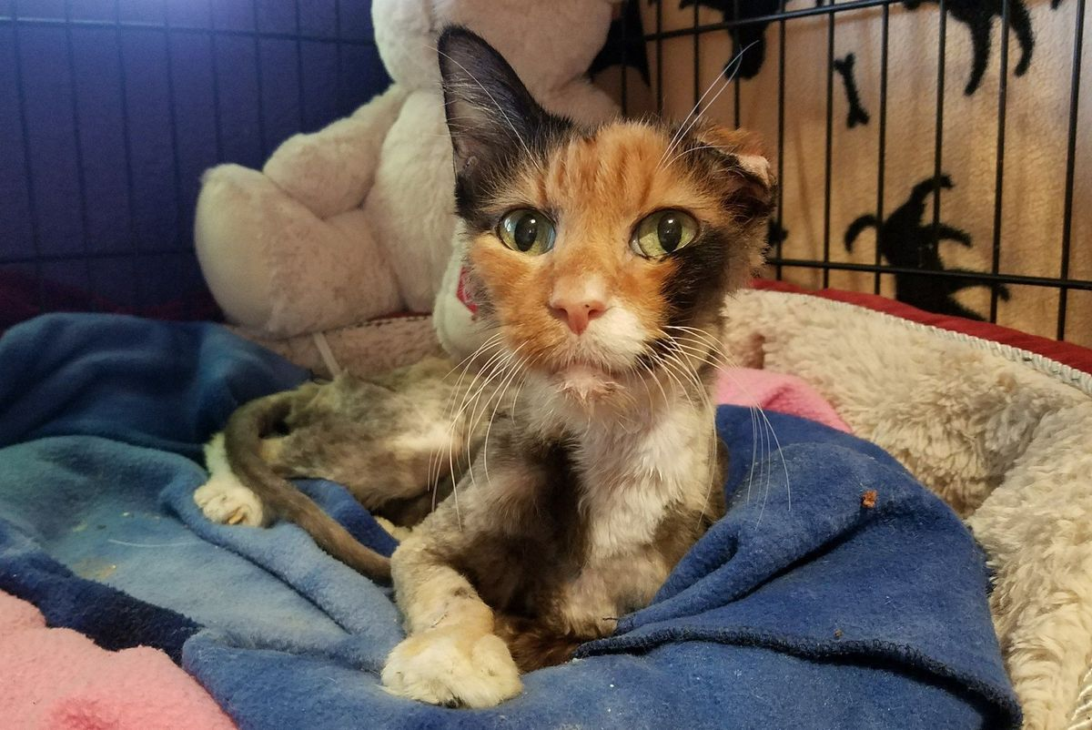 14 Year Old Cat Weighed Same as 4 Month Old Kitten, But A Few Months After the Rescue...