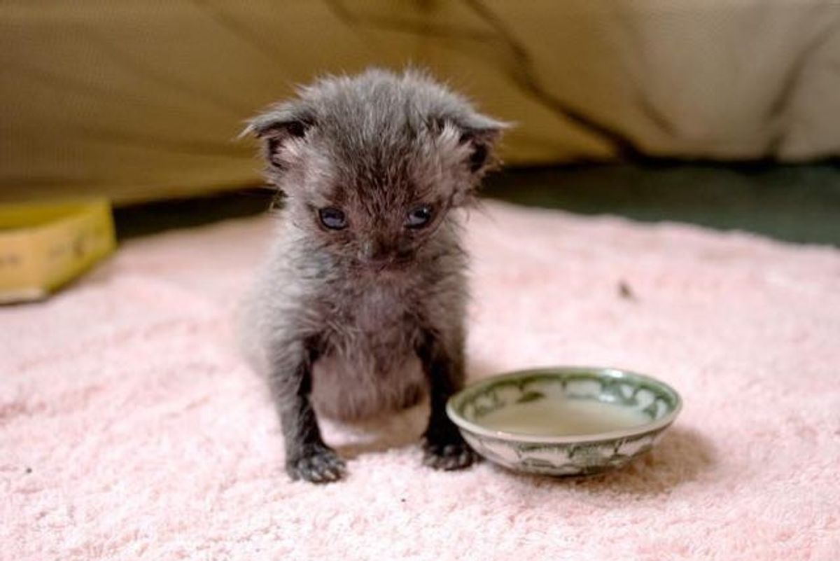 Woman Saves Orphaned Kitten After Downpour and Brings Him Back to Life (with Updates)